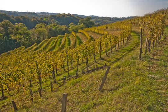 Regional Wine Festivals in France