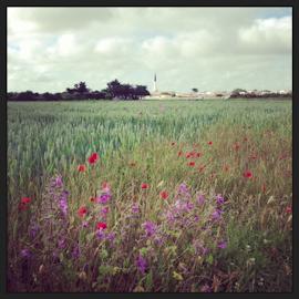 Marais Poitevin, La Rochelle, Ile de Re-10