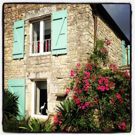 Marais Poitevin, La Rochelle, Ile de Re-11
